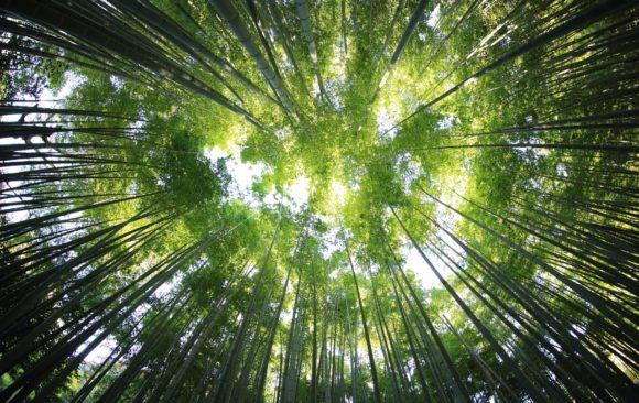 Η Οικολογία είναι ευθύνη αλλά… και τρόπος ζωής!